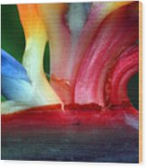 Study Of A Bird Of Paradise 3 Wood Print