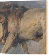 Study Of A Lion Wood Print