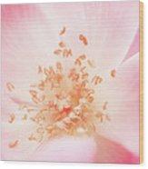 Study Of A Rose Three Wood Print