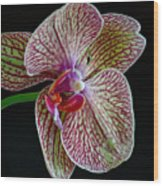Study Of An Orchid 2 Wood Print