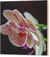 Study Of An Orchid 3 Wood Print