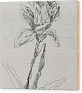 Study Of Flower Wood Print