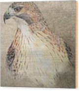Study Of The Red-tail Hawk Wood Print by Leslie M Browning