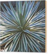 Stunning Agave Plant Wood Print