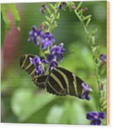 Stunning Black And White Zebra Butterfly In The Spring Wood Print