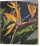 Stunning Bunch Of Flowers With Bright Orange Petals  Wood Print