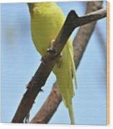 Stunning Little Yellow Budgie Parakeet In Nature Wood Print