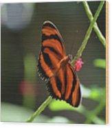 Stunning Oak Tiger Butterfly Resting On Flowers Wood Print