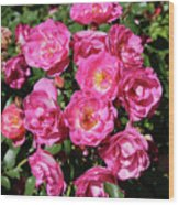 Stunning Pink Roses Wood Print