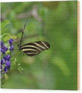 Stunning Shot Of A Zebra Butterfly On A Flower Wood Print