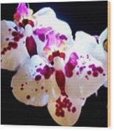 Stunning Twin Orchids Wood Print