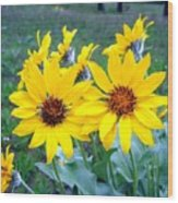 Stunning Wild Sunflowers Wood Print