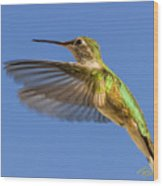 Stylized Hummingbird In Hover Wood Print