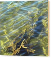 Submerged Tree Abstract Wood Print