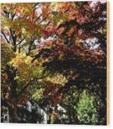 Suburban Autumn Wood Print