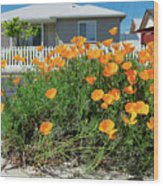 Suburban House On Orchard Avenue With Poppies Hayward California 3 Wood Print