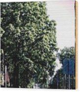 Suburban Tree Wood Print
