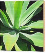 Succulent Agave Art By Sharon Cummings Wood Print