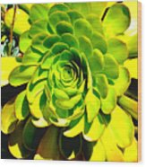 Succulent Close Up Wood Print