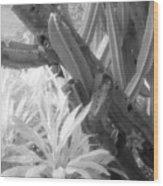 Succulent Delight Wood Print