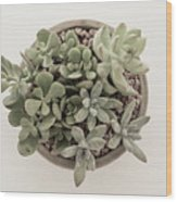 Succulent Plant From The Top Wood Print