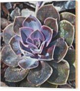 Succulent Plant Poetry Wood Print