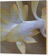 Succulent Season Wood Print