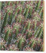 Succulent Series Vi Wood Print