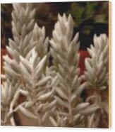 Succulent Stalks Wood Print