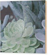 Succulents 2 Wood Print