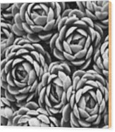 Succulents In Black And White Wood Print