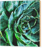 succulents Rutgers University Gardens Wood Print