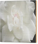 Sugar Wood Print by Kim