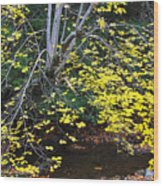 Sugar Maple Birch River Wood Print