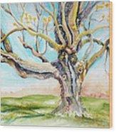 Sugar Maple On Mutton Lane Wood Print