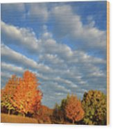 Sugar Maple Sunrise Along Route 31 Wood Print