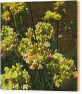 Sulfur Flower Wood Print