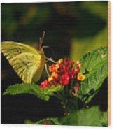 Sulpher Butterfly On Lantana Wood Print