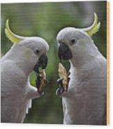 Sulphur Crested Cockatoo Pair Wood Print
