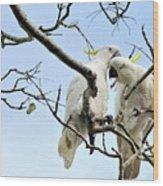 Sulphur Crested Cockatoos Wood Print