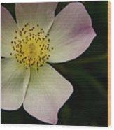 Sultry Hellebore Wood Print