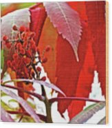 Sumac Closeup On White Pine Trail In Kent County, Michigan Wood Print