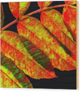 Sumac Leaves Wood Print
