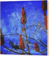 Sumac Tree Wood Print