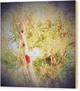 Sumac Tree In The Sunlight Wood Print