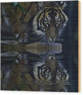 Sumatran Tiger Reflection Wood Print