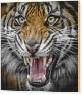 Sumatran Tiger Snarl Wood Print