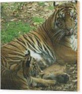 Sumatran Tigers  Wood Print