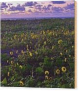 Summer Beach Daisies 1 Wood Print
