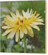 Summer Bloom Wood Print